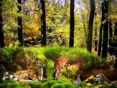 Gute-Nacht-Geschichte: Willkommen im Wald