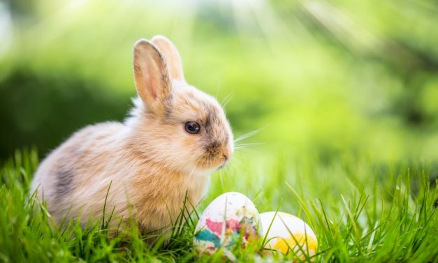 Kein Ostern ohne Osterhase