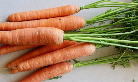 Beikost ab 4. Monat: Karottenbrei (auf Vorrat gekocht)