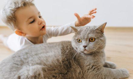 Katze und Baby: Die besten Tipps